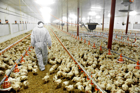 Effective Control of Avian Flu with Chlorine Dioxide